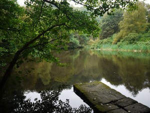 Jetty and pond at Fishpond Wood