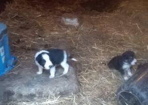 Blog 9 - new puppies 1