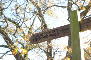 Fingerpost Fishpond Wood (Sally Wilson)