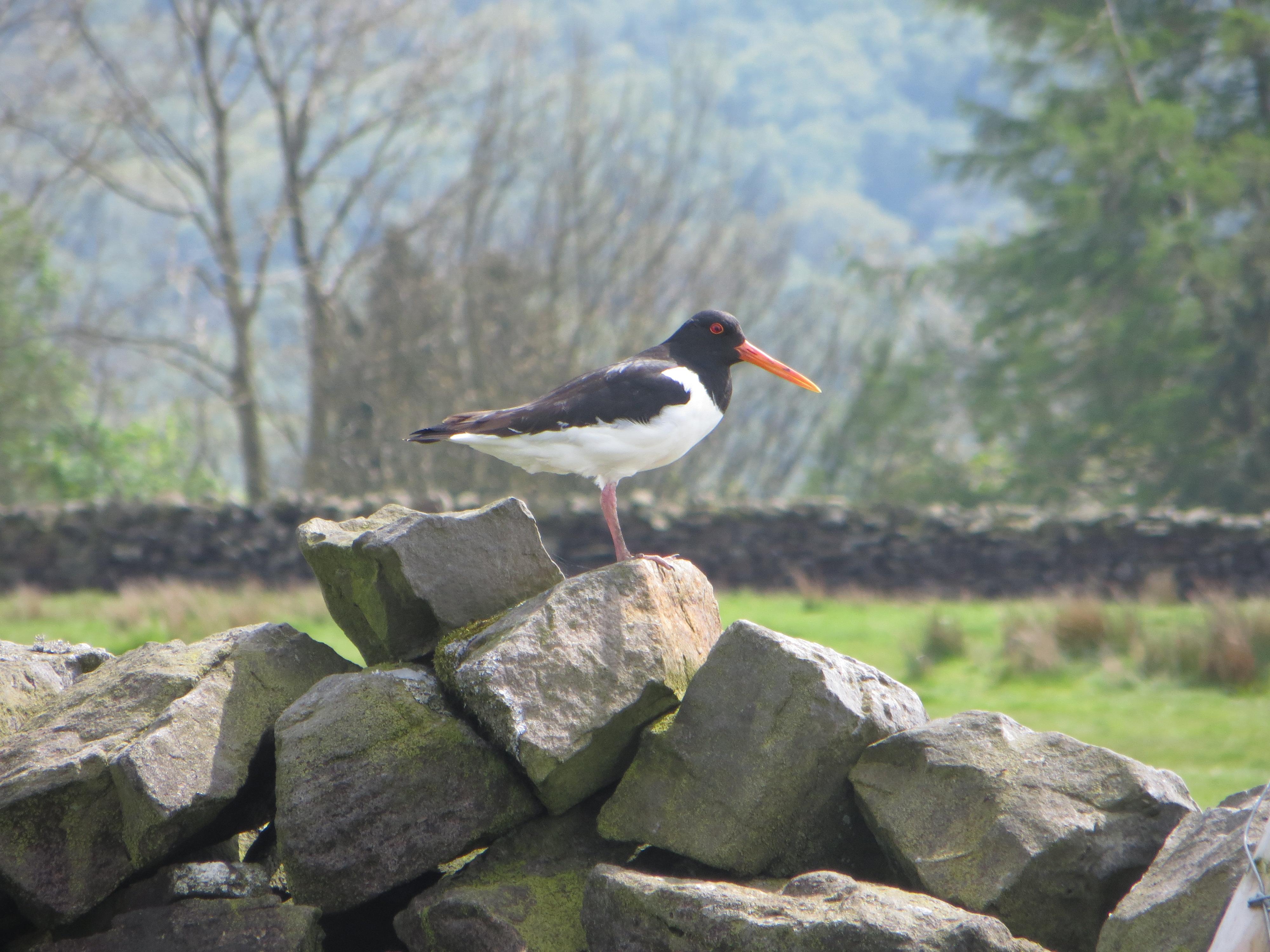 Photo of the Month | Nidderdale Landscape Partnership